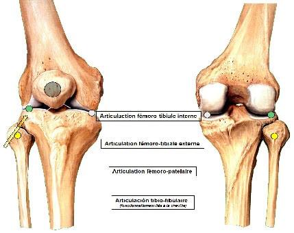 anatomie du genou douleur course