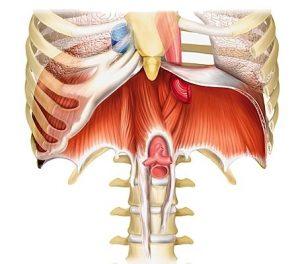douleurs cotes diaphragme grossesse